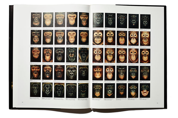 James and Other Apes preview