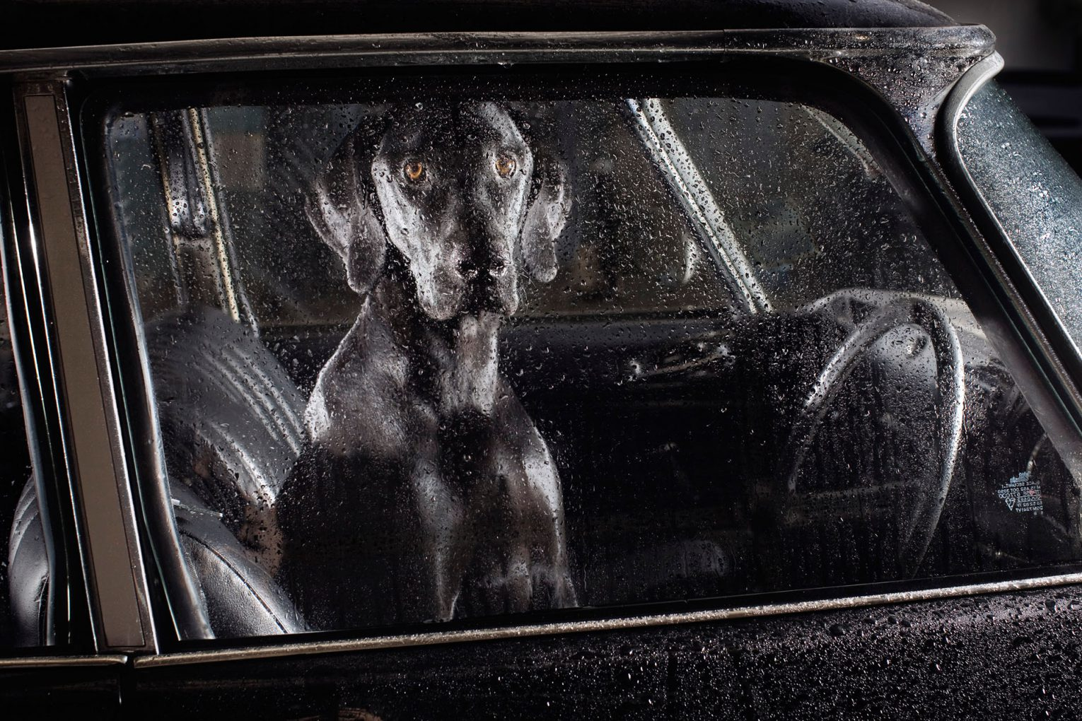 The Silence of Dogs in Cars preview