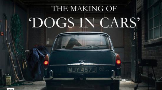 Making of Dogs martin usborne