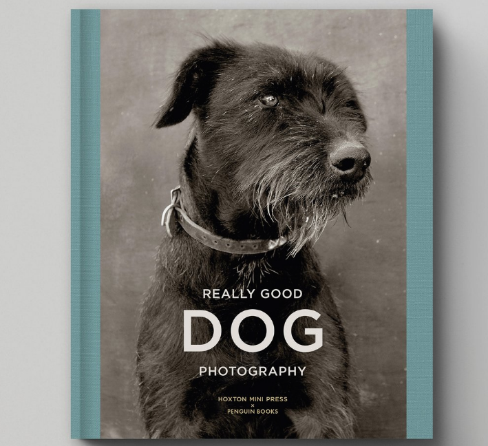 Really Good Dog Photography preview