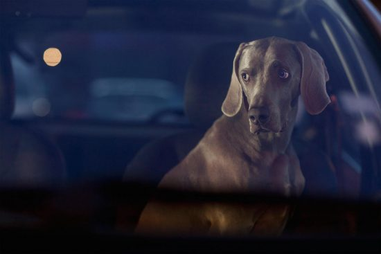 Exhibition view Hector – The Silence of Dogs in Cars - Flatland Gallery Amsterdam